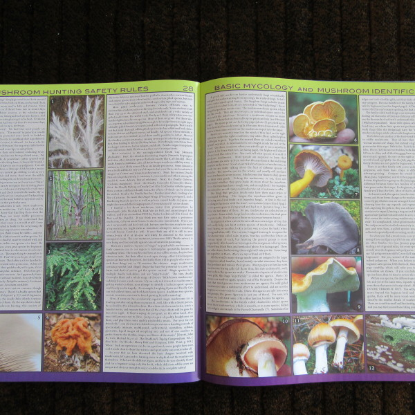 Pages from the Book portion