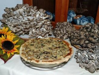 mushroom pie 2